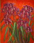 """Red Cymbidiums"""